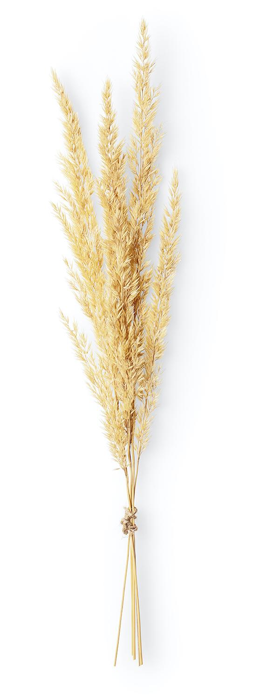 Servicios de agricultura